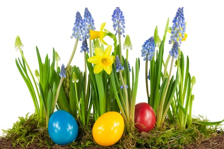 hen's: Colorful Easter eggs with spring flowers in front of white background Stock Photo