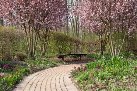 Stone walkway winding its way through a flowering garden in springtime photo