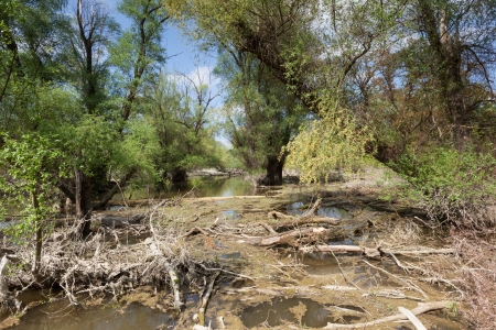 Flooded natural forest with rotting wood photo
