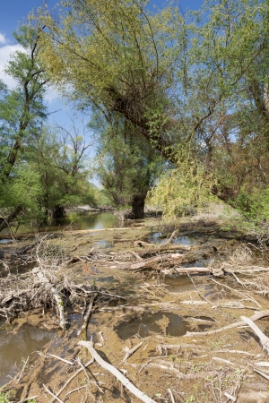 rotting: Flooded natural forest with rotting wood Stock Photo