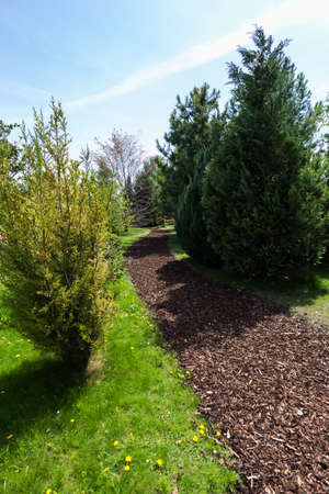 bark mulch: Garden Path with bark mulch on a sunny spring day Stock Photo
