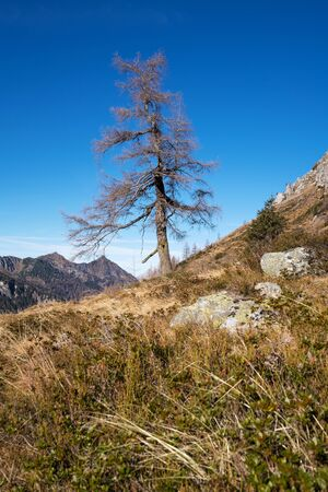 seclusion: Single pine tree in the Schladming Tauern Styria; Austria Stock Photo
