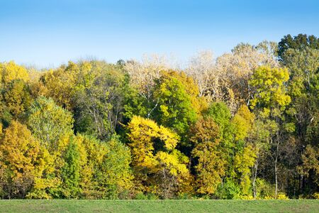 tree plan: Forest with colorful leaves in autumn Stock Photo