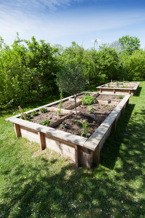 flower beds: Herbs and vegetables in a raised bed