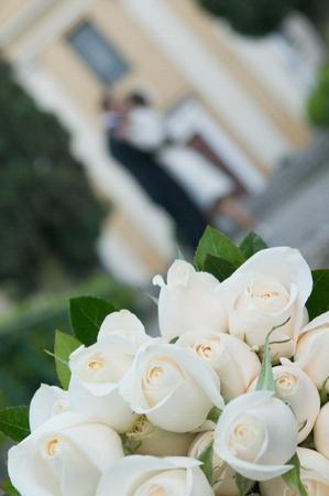 Rose in love photo
