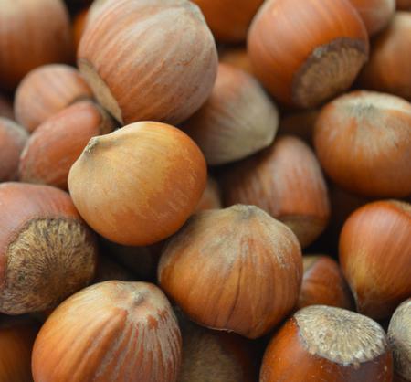 The hazel nuts. Closeup