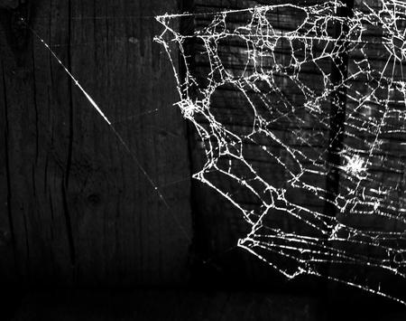 cobwebs: Cobwebs on black background Stock Photo