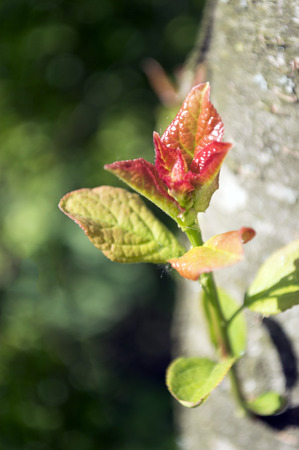 live again: Young green sprout of the tree