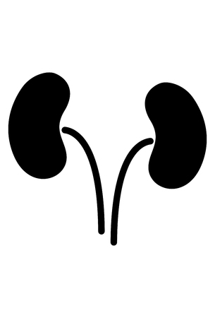 Kidneys Icon Vector
