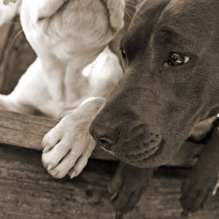 Two dogs laying next to each other on bench Stock Photo