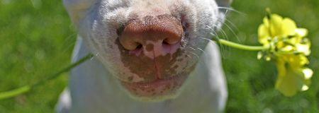 dog holding flower in mouth Standard-Bild