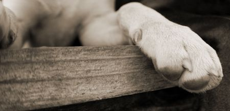 dog's paw while dog is laying on bench Stock Photo