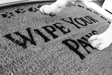 """dog walking on rug that says """"wipe your paws"""""""
