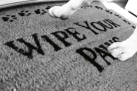 dog walking on rug that says