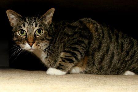 cat under bed Stock Photo