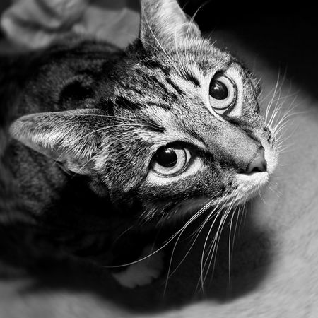 cat looking up Stock Photo - 3196555