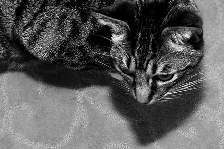 cat looking at something Stock Photo - 3196569