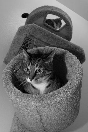 two cats playing on furniture Stock Photo - 3196547