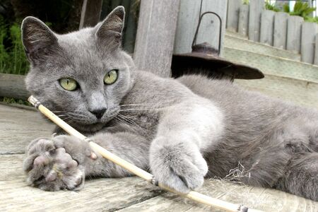 cat playing with stick while laying down