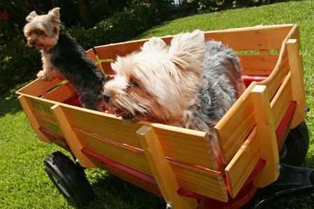 two dogs in wagon Stock Photo