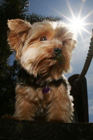 dog on dock photo