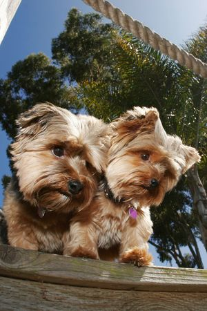 two dogs on dock