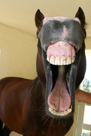 big mouth: horse opening mouth