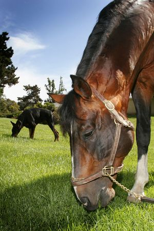 horse and dog eating grass photo