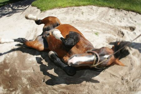 horse rolling in sand pit Stock fotó