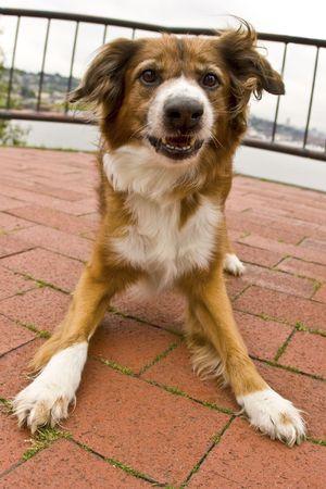 dog playing Reklamní fotografie