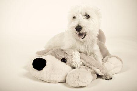 white dog sitting on stuffed dog