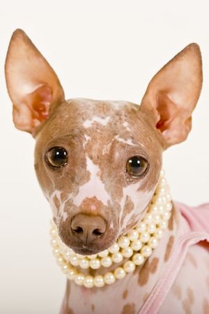 hairless dog wearing pink tutu and pearl necklace