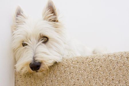 dog laying on staircase