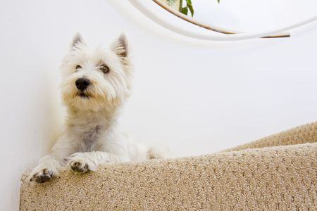 dog laying on staircase photo