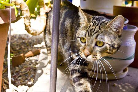peaking: cat peaking form behind table leg