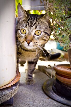 peaking: cat peaking form behind potted plant