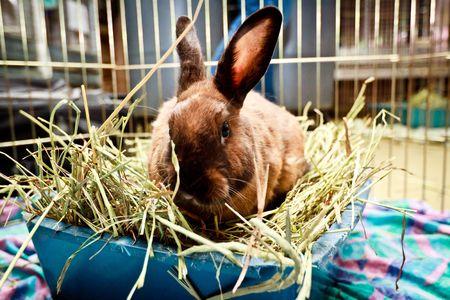 brown bunny sitting in hay Standard-Bild