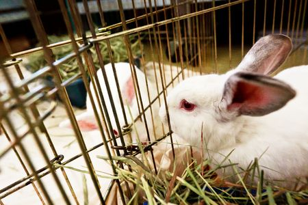 two white bunnies looking through their cages Standard-Bild