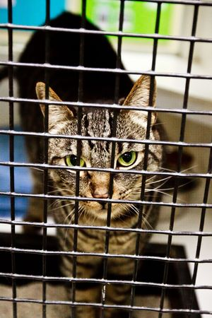 calico: Calico cat behind cage door