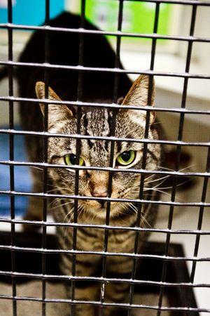 Calico cat behind cage door