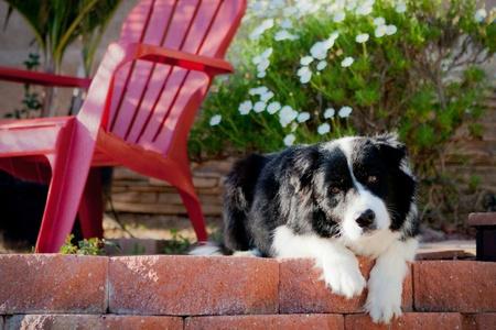 Border Collie looking sad on porch
