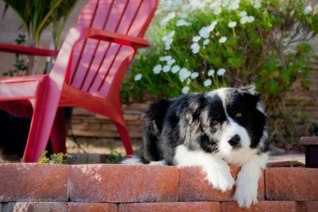 pet photography: Border Collie looking sad on porch