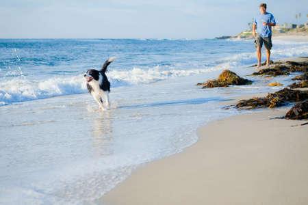 Bordie Collie running on beach Stock Photo