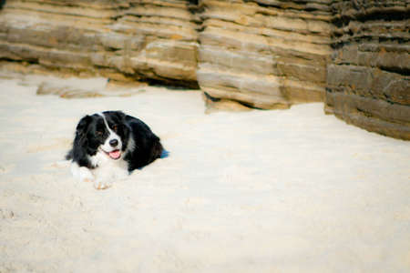 Border Collie laying on beach smiling
