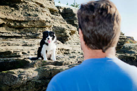 Border Collie sitting on rock looking at man Stock Photo
