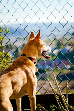 dog looking out through fence Stock Photo