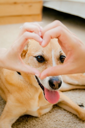 smiling dog with heart shaped hands in front of face