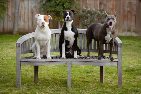 three animals: three dogs on bench Stock Photo