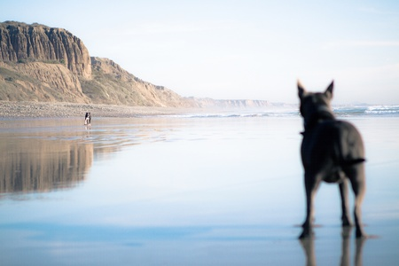 dog watching other dog run on beach