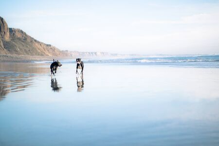two dogs running on beach Stock Photo